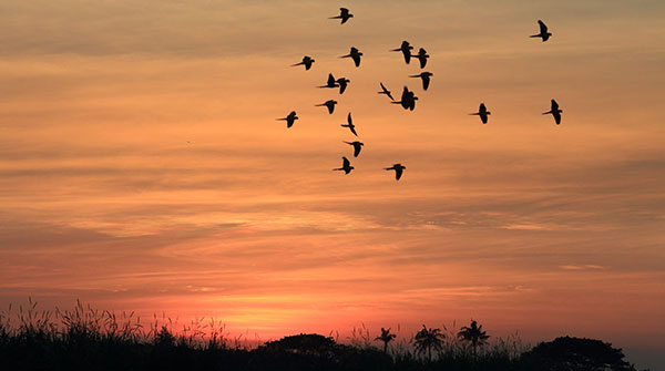 flying bird and sunset - Image