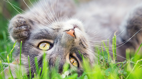 Close up photo from a cute domestic cat playing outdoor - Image