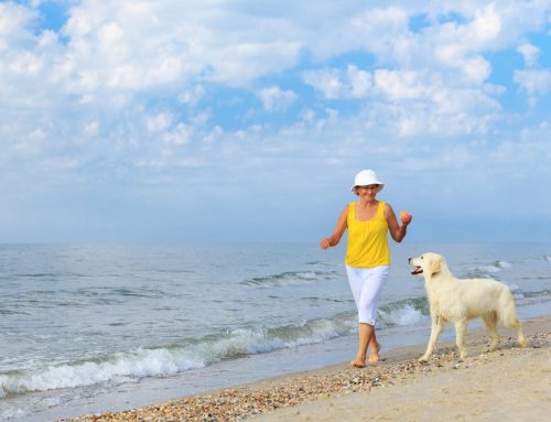 4 Summer Tips to Keep Pets Cool (and How to Spot Heatstroke)