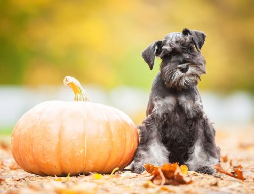 Dos and Don'ts for Ensuring Your Pet Has a Safe, Happy Halloween