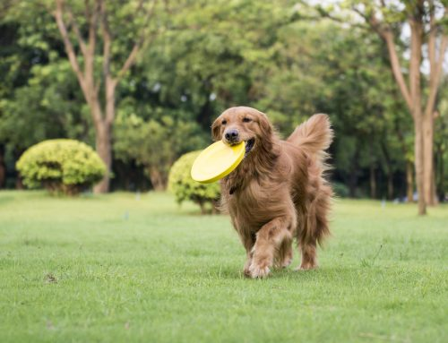 Heartworm Disease: What You Need to Know About This Pesky Parasite