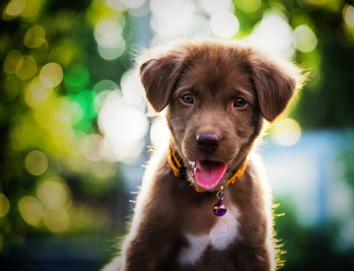 4 Simple Steps to Set Your Puppy Up for Success