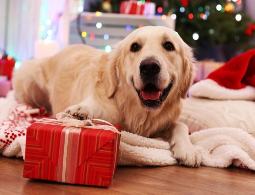 Survey Results: The Best, Safest, and Most Fun Holiday Pet Gifts