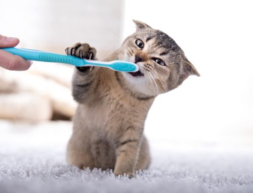 6 Facts Every Pet Owner Needs to Know About Their Pet's Dental Health