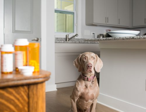 5 Common Household Pet Toxins