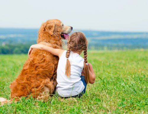 4 Tips for Keeping Your Kids Safe Around Pets